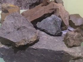 原矿红皮龙照片